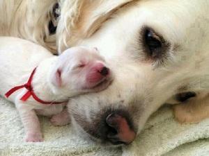 cuccioli-di-cane-con-mamma-5